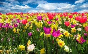 fiori nei matrimoni