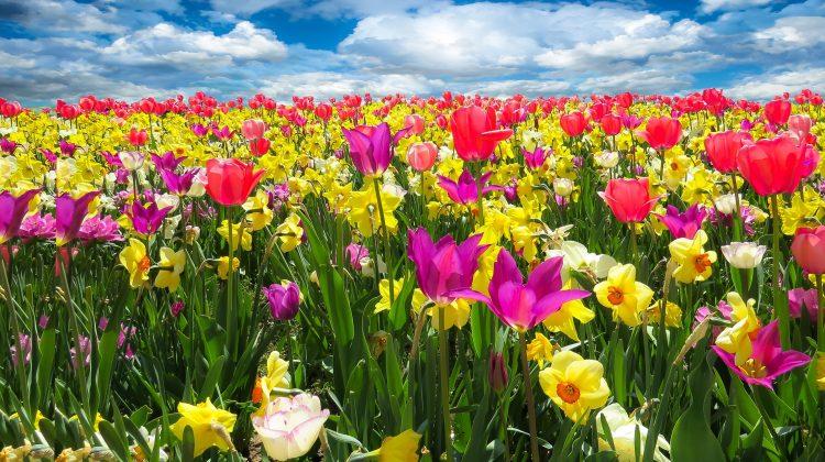 Il significato dei fiori nei matrimoni